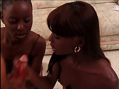 Twins Mocha and Chocolate Love White Cock